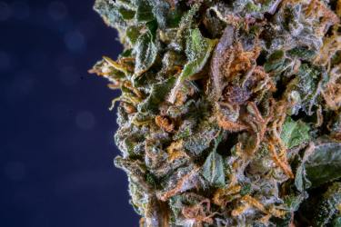Indica vs Sativa Doesn't Mean What You Think